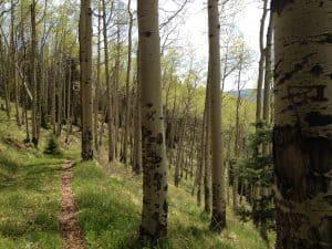Biophilic Design - Aspen grove